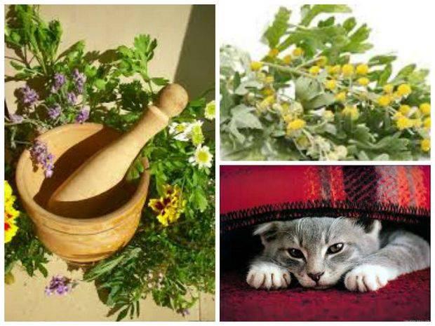 Кошачий репеллент: какой лучше и эффективнее: натуральный, самодельный, спрей или ультразвуковой?