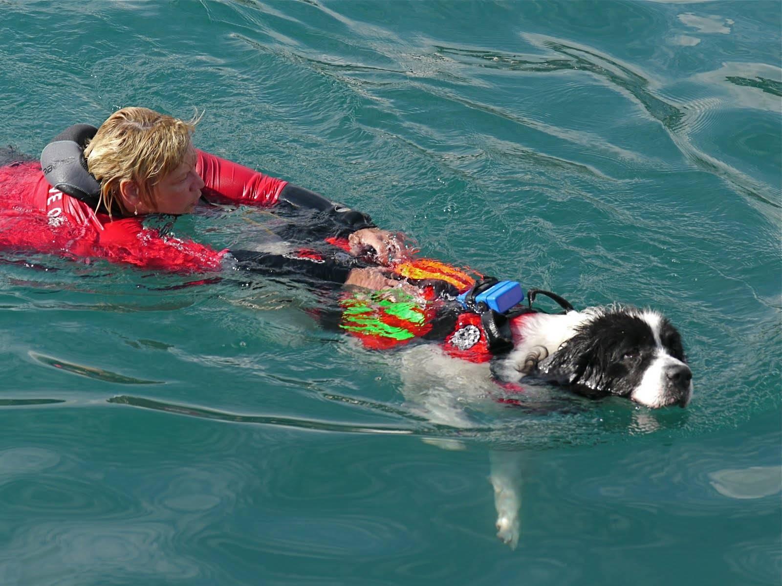 Породы собак спасателей
