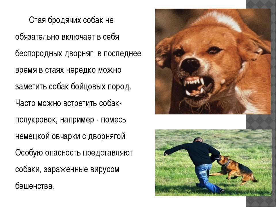 Если нападает собака — что делать?