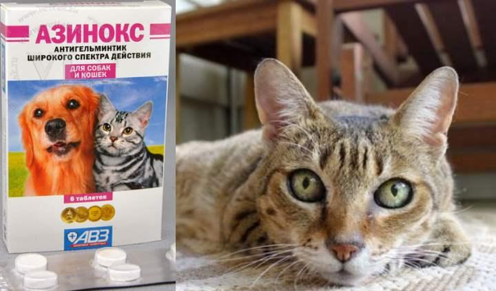 Азинокс для кошек: инструкция по применению, состав и отзывы
