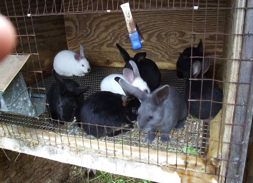 Вольерное содержание кроликов | свое хозяйство