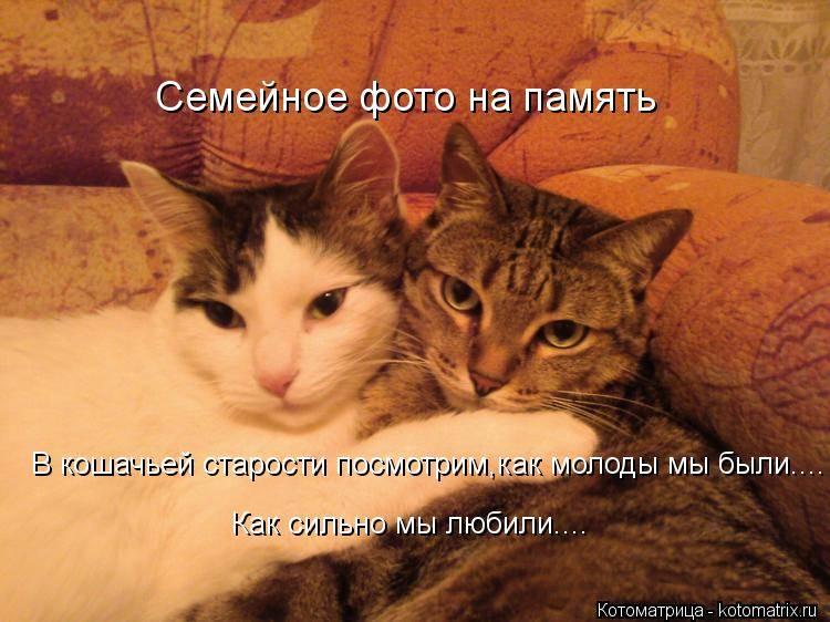 Как долго длится память у кошек - oozoo.ru