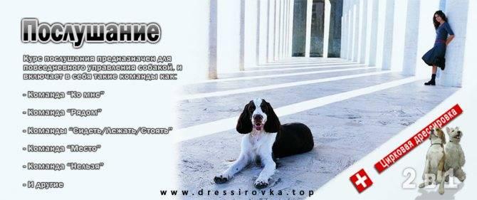 Сложно ли обучить собаку команде «лежать» и как правильно выстроить процесс дрессировки? как научить собаку команде «лежать»?