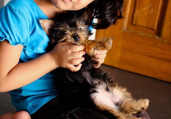Как уговорить родителей (маму и папу) купить собаку, если они не хотят