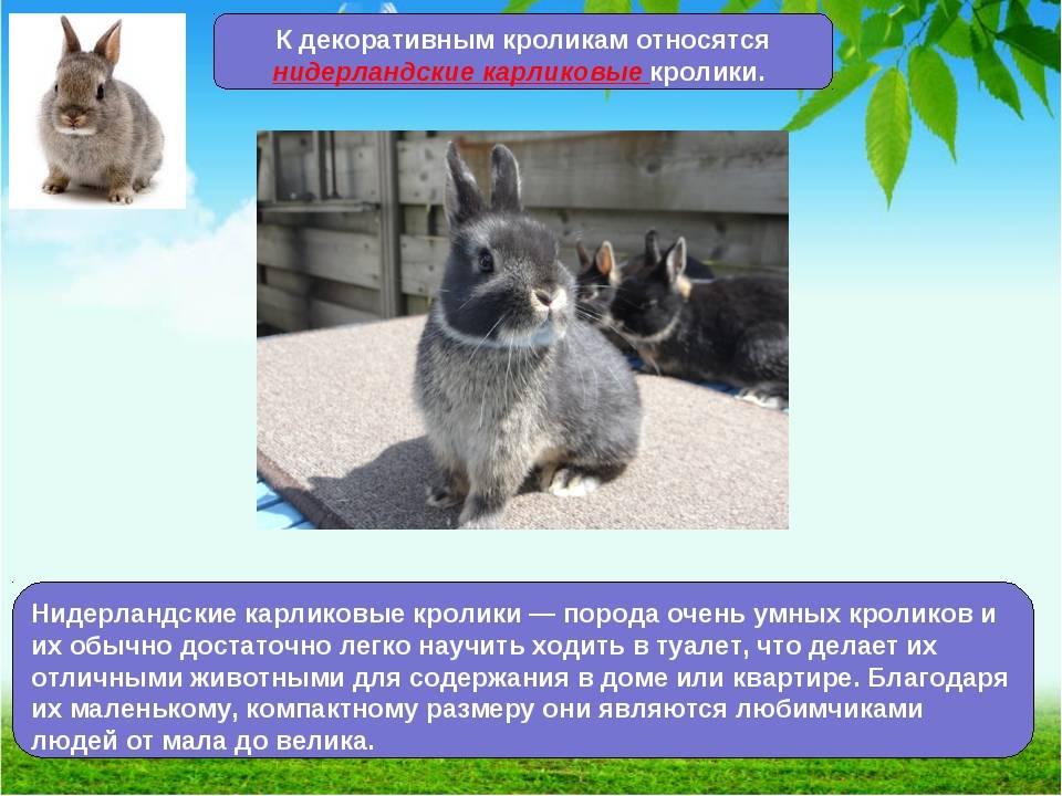 Чем внешне отличается заяц от кролика