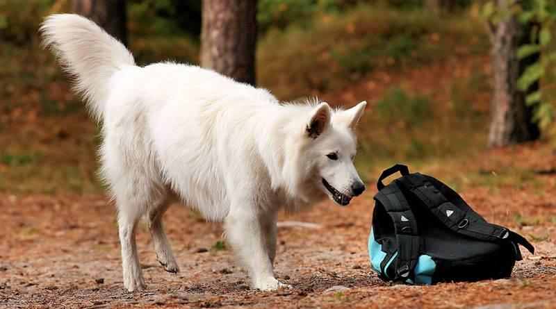 Как дрессировать собаку в домашних условиях: общие советы и рекомендации