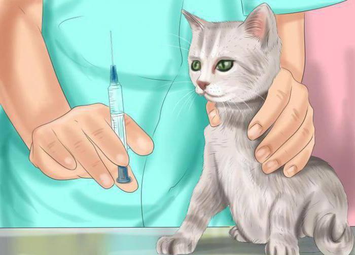 Иммунодефицит у кошек: вирус, ВИК, СПИД, что это такое