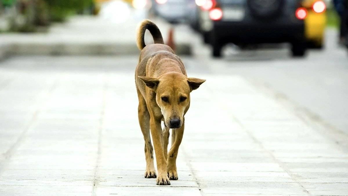 Как найти собаку, если она убежала: пошаговая инструкция