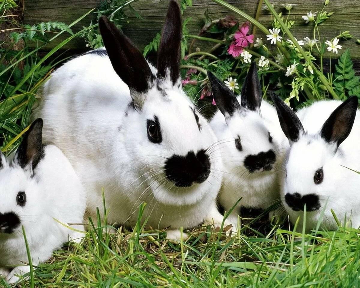 Крольчиха не подпускает крола — причины и решения
