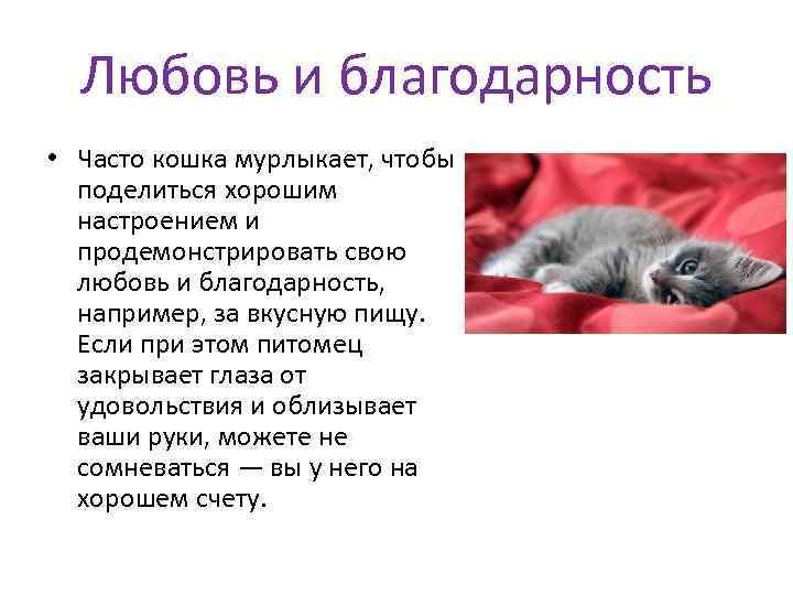 Почему кошки мурчат? зачем и как они это делают?