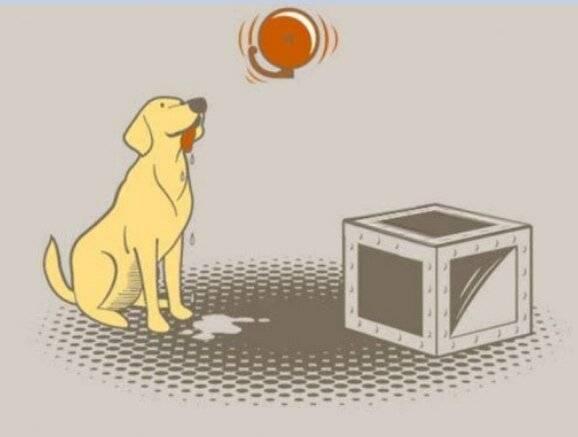 Эксперименты павлова над собаками