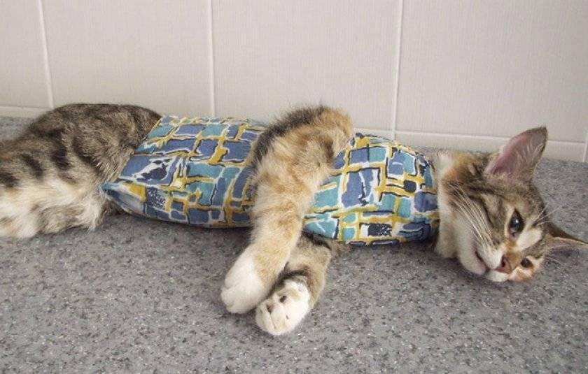 Как ухаживать за кошкой после стерилизации по дням