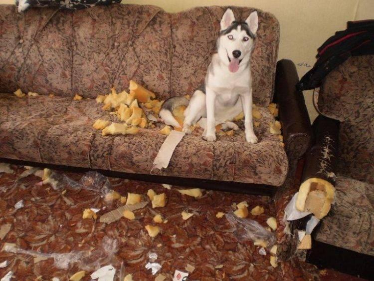 Как отучить собаку выть и скулить: способы