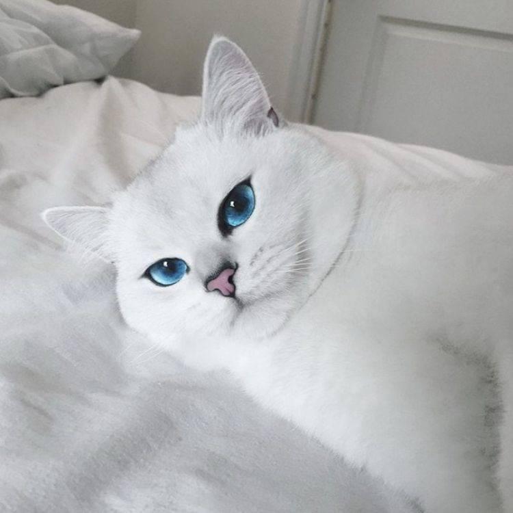 Белая кошка с голубыми глазами: название породы