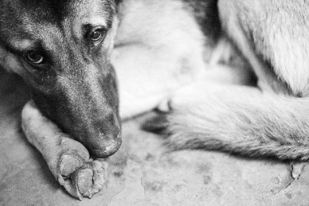 Могут ли собаки плакать от боли и грусти: что такое собачьи слезы, причины слез