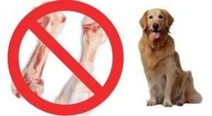 Можно ли давать собаке куриные кости и почему нельзя