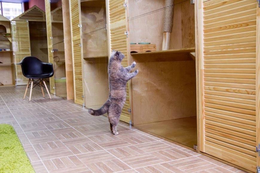 Отпуск от хозяина. кошку на время отпуска