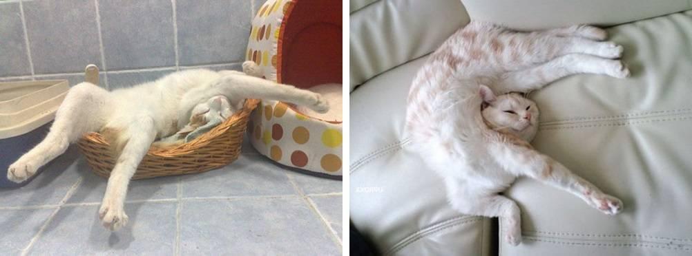 Кошка прячется в темные места не ест. прячется и мяукает – или заболела наша кошечка? светобоязнь, как нормальное явление