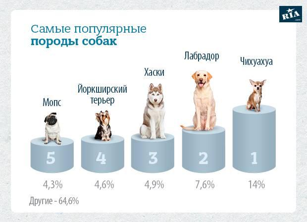 Сколько пород собак
