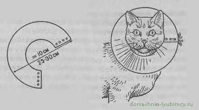 Воротник для кошки своими руками | как сделать, защитный