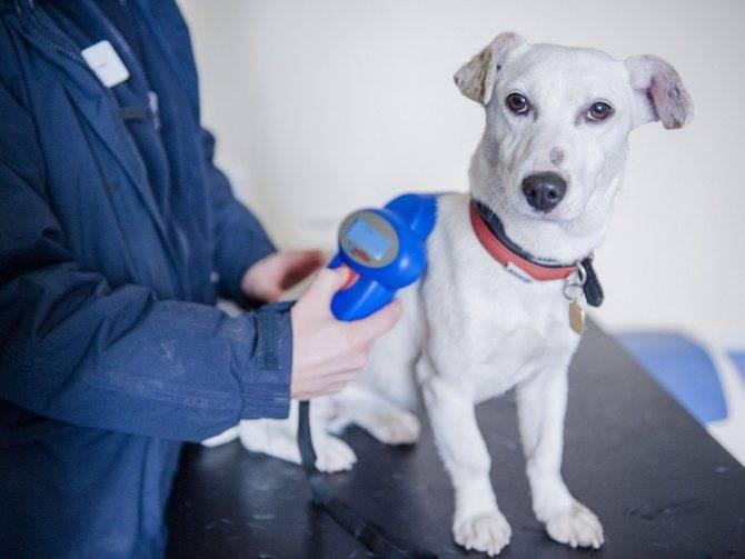 Как найти хозяина собаки по клейму: база данных, порядок действий и советы опытных кинологов
