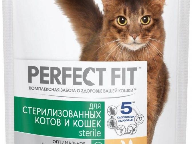 Perfect fit (корм для кошек): обзор рационов и состав