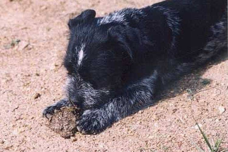 Почему собака ест кал других животных