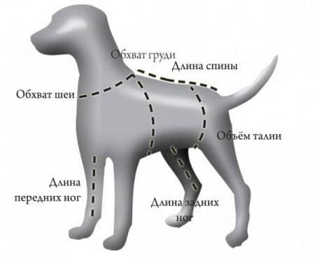Где находится холка у собак: измеряем рост питомца правильно