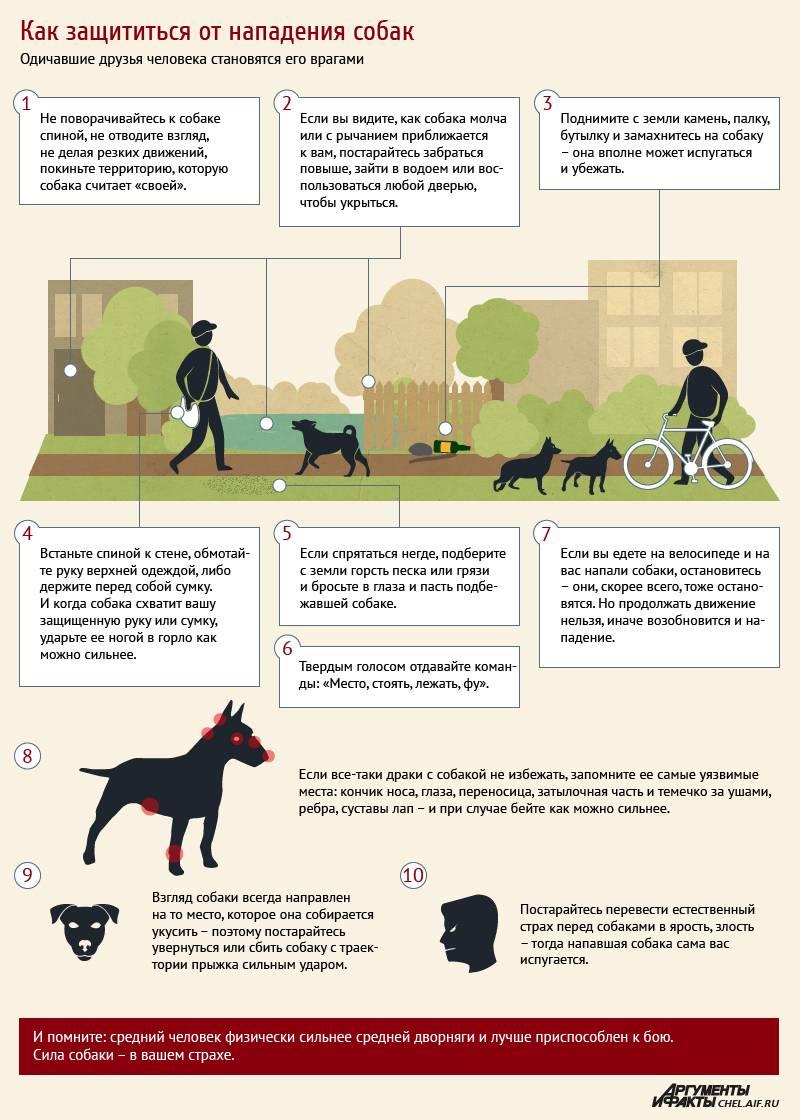 Что необходимо сделать при нападении собак на человека и как себя вести