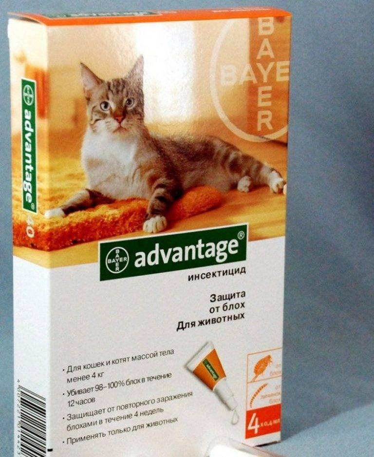 Адвантейдж для кошек - инструкция по применению, отзывы, цена   сайт «мурло»