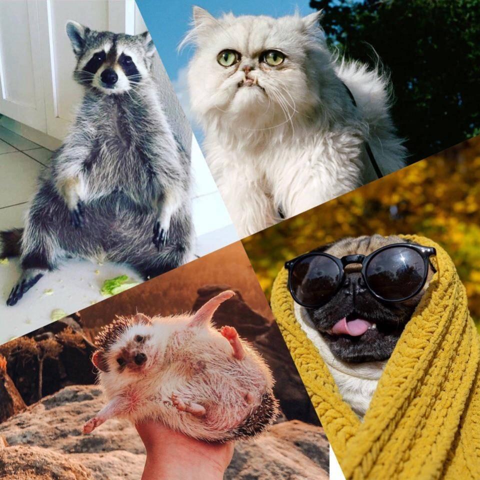 «мой хозяин…блогер!»: 10 популярных животных в инстаграм | sm.news