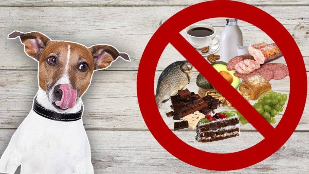 Что может означать вялость у собаки и отказ от пищи: что может сделать хозяин