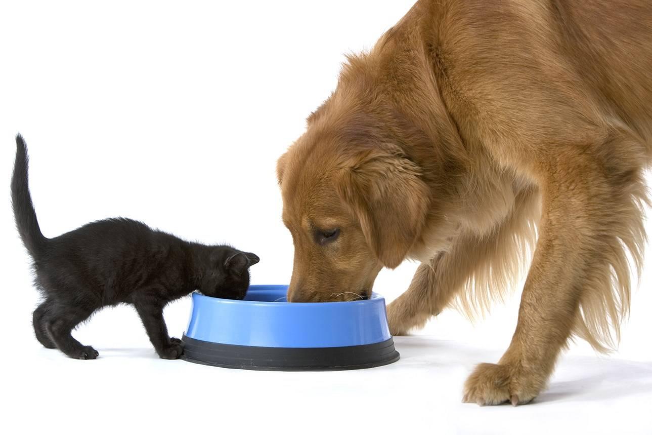 Агрессивная кошка: как отучить питомца кусаться и царапаться