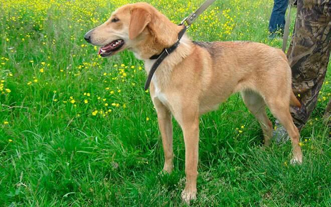 Как назвать собаку девочку. клички собак для сук | воспитание собак | ptichka.net - домашние питомцы