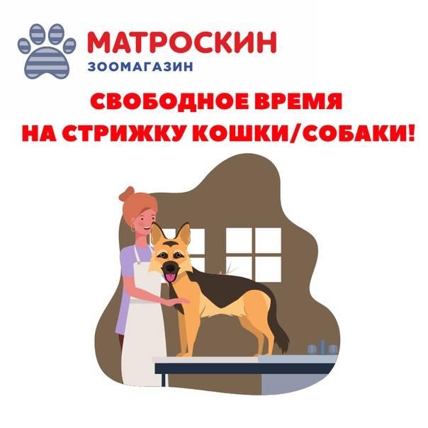 Причины линьки у собак и что делать