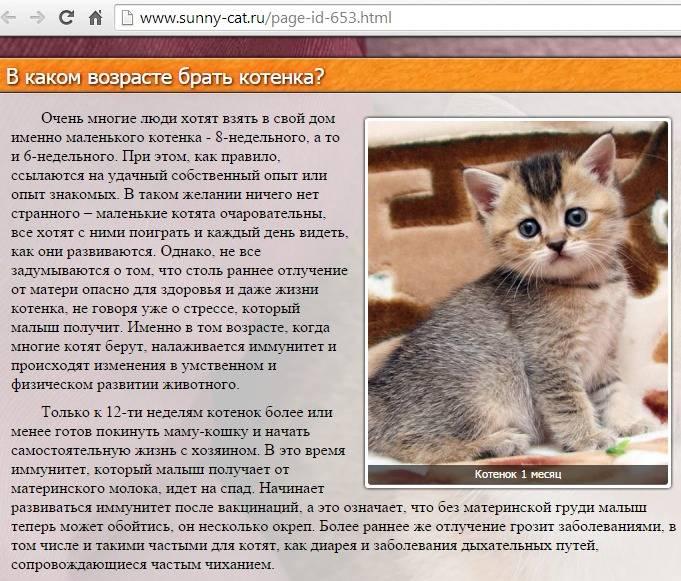 Куда деть кошку, если она не нужна, описание вариантов, видео с советами