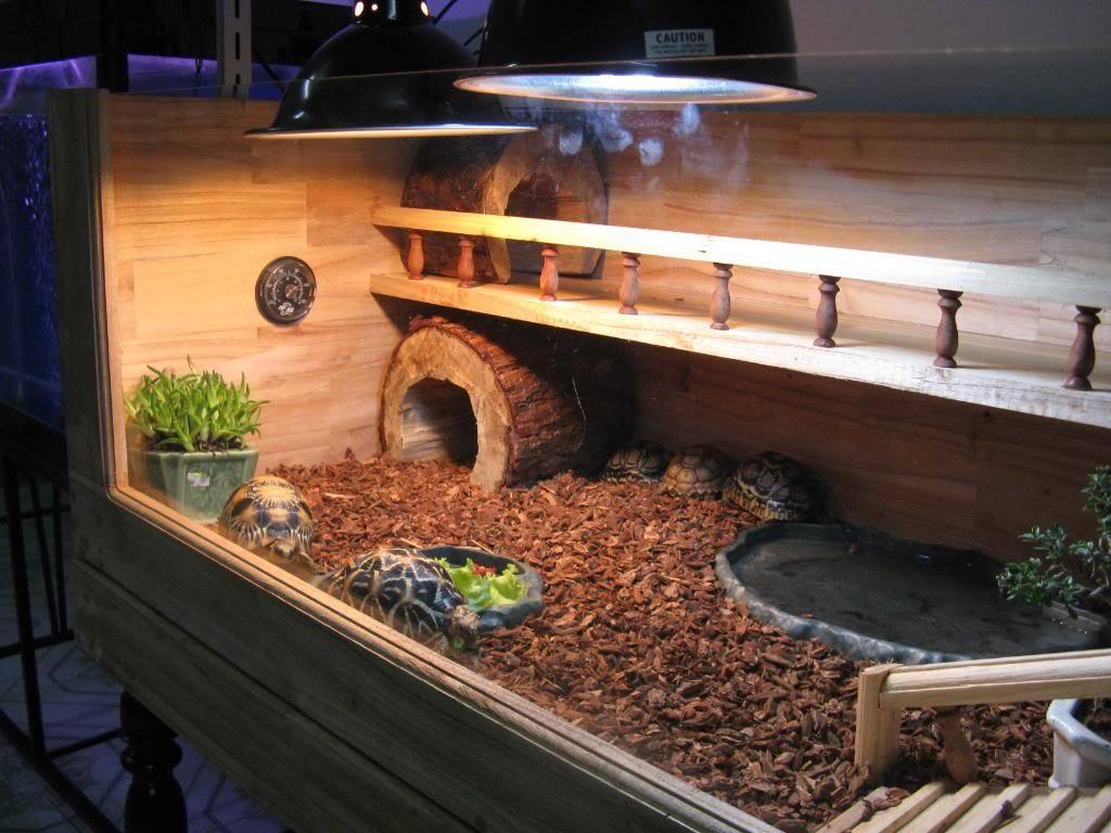 Какой террариум лучше выбрать для красноухих черепах? общие советы - твой питомец