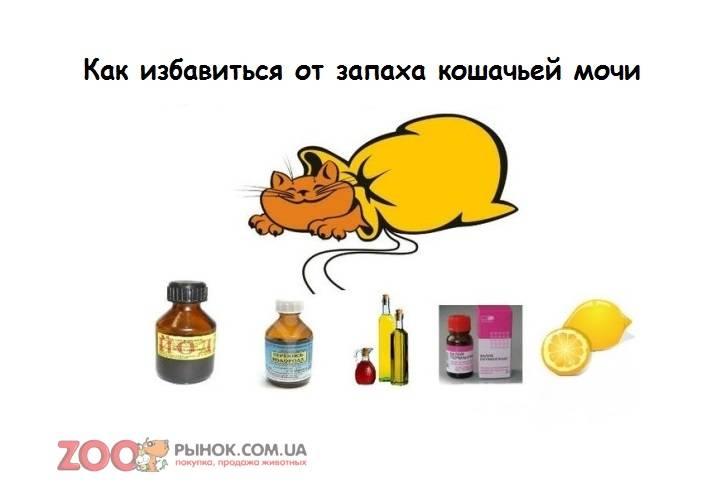 Запах мочи похожий на кошачий - для врачей