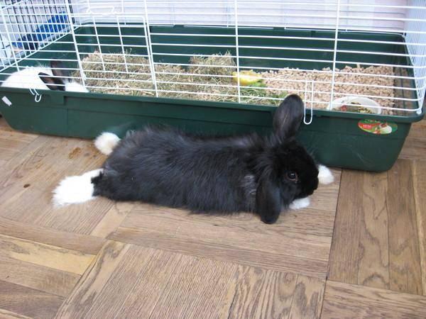 Как лечить понос у кроликов?