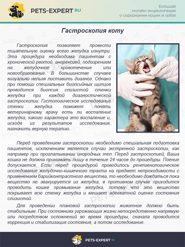 Понос с кровью у кота: причины, как лечить питомца дома и в клинике