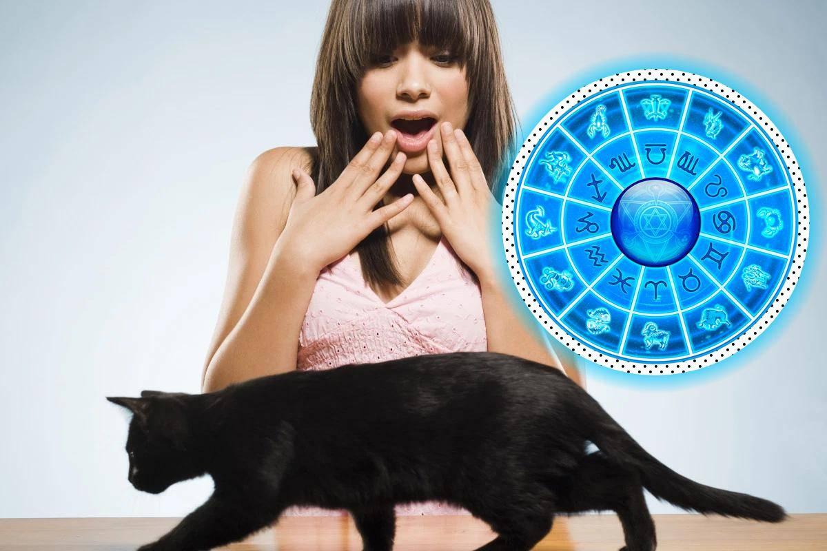 Почему кошки боятся воды? - hi-news.ru