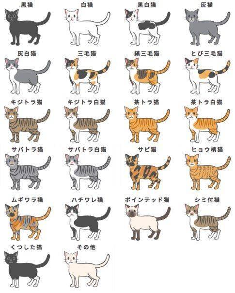 Сноу-шу (56 фото): описание кошек, котов и котят породы сноу-шу. особенности характера снежных кошек. сколько они живут? варианты окраса