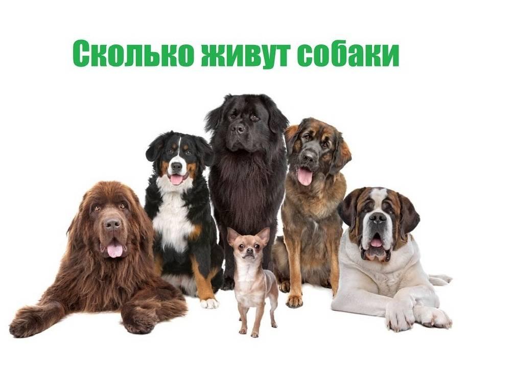Сколько лет живут собаки - подробный ответ