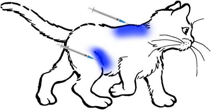 Как избавится от кошки (кота или котят) гуманным способом при необходимости