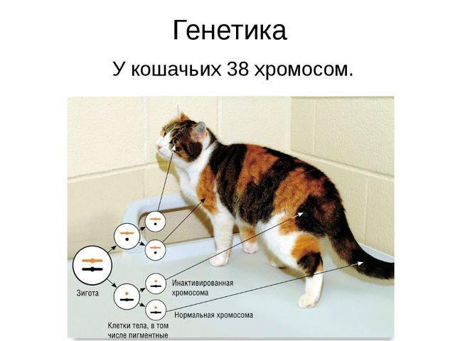 5 типов характера кошек [подберите подходящий]