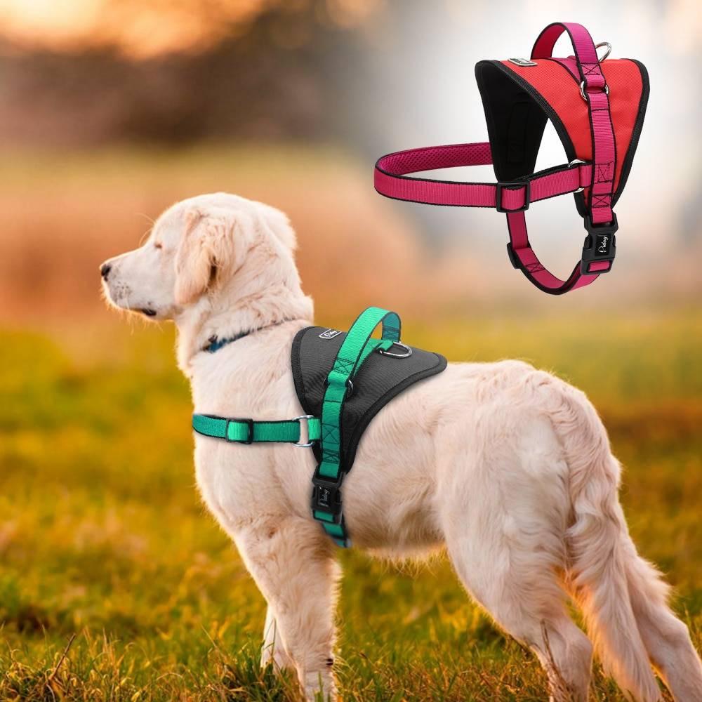 Чем так хороша и удобна шлейка для собак