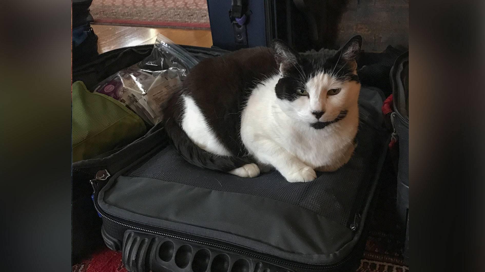 Как перевезти кошку в поезде, как везти кота по россии, что нужно взять с собой