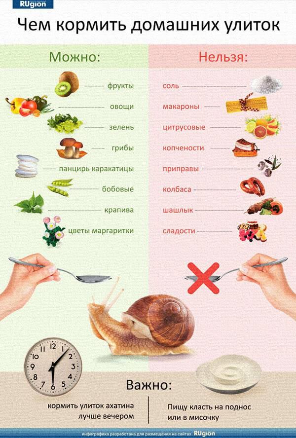 """Чем можно и нельзя кормить белку в домашних условиях? — журнал """"рутвет"""""""