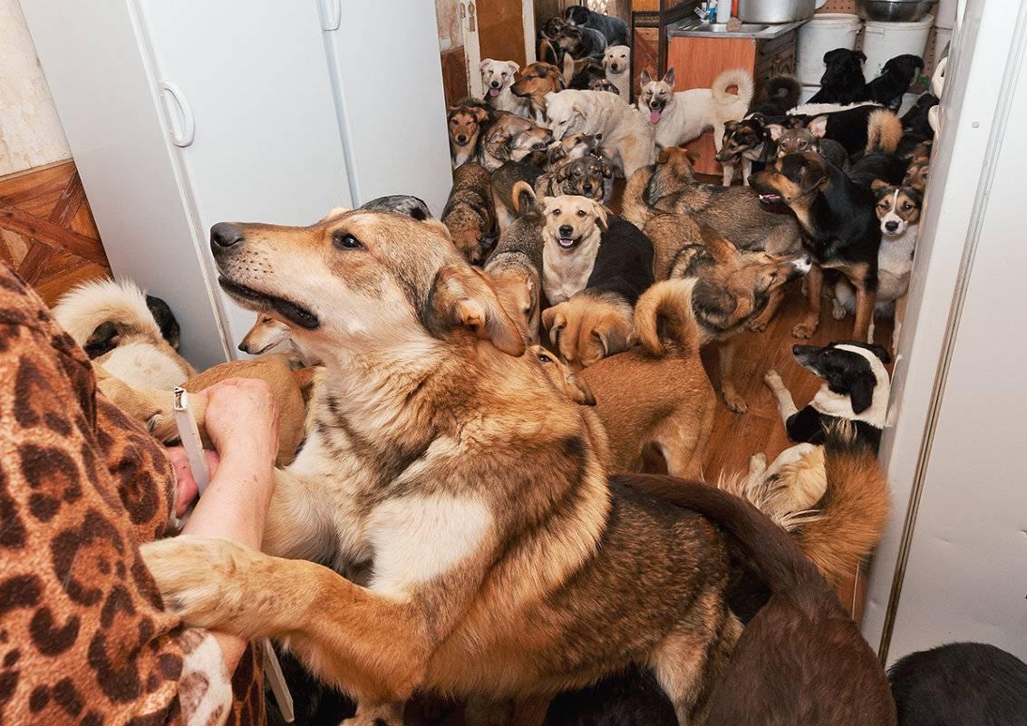 Куда отдать собаку навсегда в приют