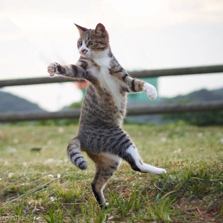 Как развеселить кота: способы и приёмы, улучшающих его настроение